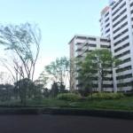 西新小岩リバーハイツの敷地内の公園